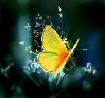 Fertiliteits Vlinder