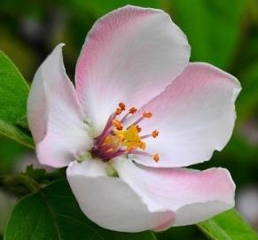 bloem kern1
